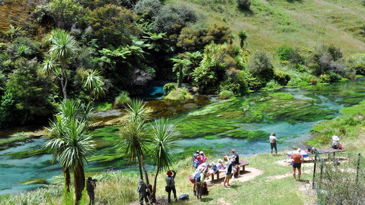Te Waihou Walkway Blue Springs - Campervan for Hire NZ